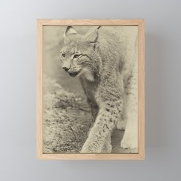 beautiful lynx Framed Mini Art Print