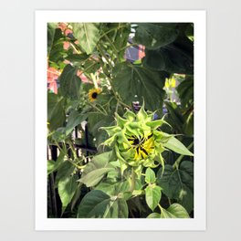 This sunflower is closed until further notice Art Print
