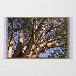 GREAT MADRONA TREE LOOKING SKYWARD Rug