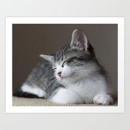 Jack - Kitten Portrait #3 (2016) Art Print