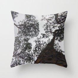 Southern Pines Trees Sky Florida Nature Photography  Throw Pillow