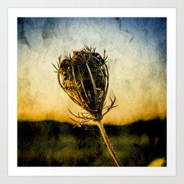 Cow Parsley Seedhead - Textured effect. Art Print