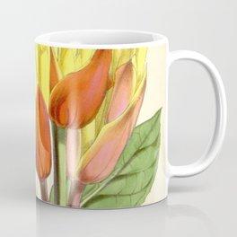 Sanchezia nobilis 5594 Coffee Mug