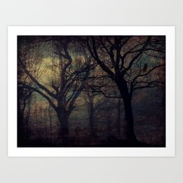 Forest at Night Art Print