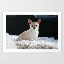 Blond Chihuahua Art Print