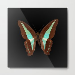 Butterfly - Graphium milon anthedon (Indonesia) Metal Print