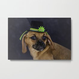 Puggle Puppy Wearing a Green Banded St. Patrick's Day Hat Metal Print