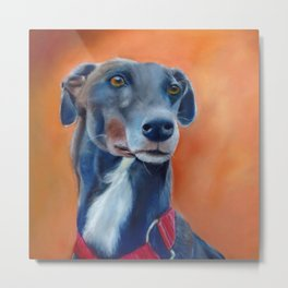 Black greyhound with white bib (a342) Metal Print