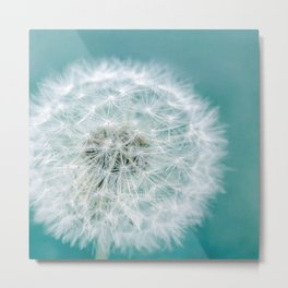 Puff - Teal and White Dandelion Clock Photo Metal Print