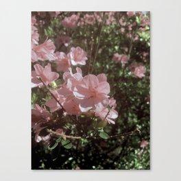 Happy Little Pink Flowers Canvas Print