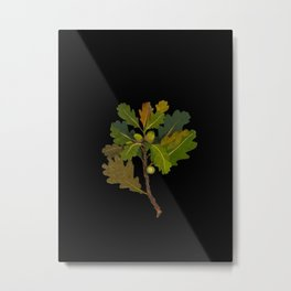 Quercus Robur Mary Delany Vintage Floral Collage Botanical Flowers Black Background Metal Print