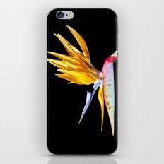 Bird of Paradise Flower iPhone & iPod Skin