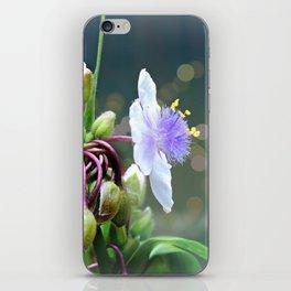Tradescantia (Spiderwort) iPhone Skin