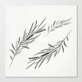 Eucalyptus leaves black and white Canvas Print