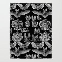 1904 Haeckel Chiroptera Poster