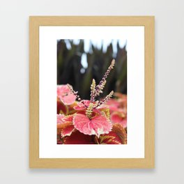 Fall II Framed Art Print