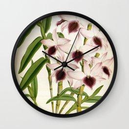 Dendrobrium Ainsworth Roseum Vintage Lindenia Orchid Wall Clock