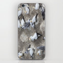 Gannet Colony iPhone Skin