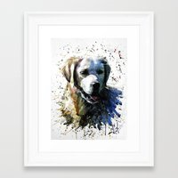 labrador Framed Art Prints featuring Labrador by KOSTART