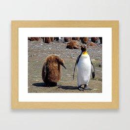 King Penguin and Chick Framed Art Print
