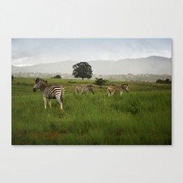 Swaziland Three Zebras Canvas Print