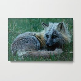 Fox Photography Print Metal Print