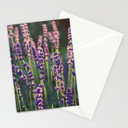 Beautiful backlit lavender plant flower heads Stationery Cards
