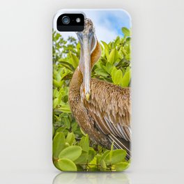 Big Pelican at Tree, Galapagos, Ecuador iPhone Case