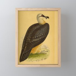 Vintage Print - A History of the Birds of Europe (1859) - Bearded Vulture Framed Mini Art Print