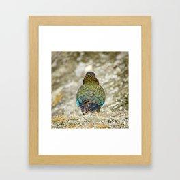 The Mountain Parrot's Back Framed Art Print
