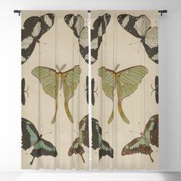 BUTTERFLIES Pieter Cramer Blackout Curtain