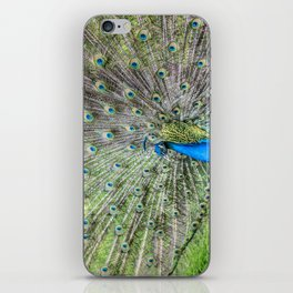 The peacock portrait iPhone Skin