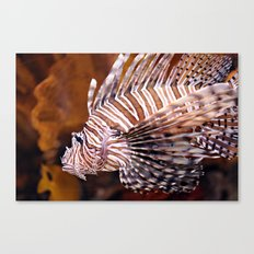 Tiger Fish Canvas Print