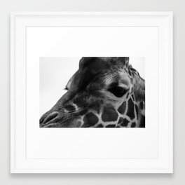 Zoo series no.3 giraffe Framed Art Print