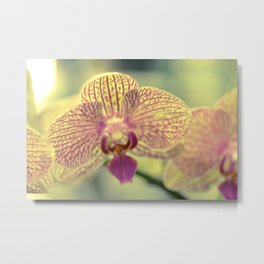 Orchid Ⅲ Metal Print