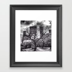 Central Park Tree. Framed Art Print