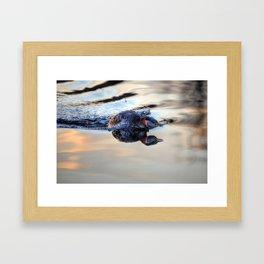 Grebe Torpedo - Red-necked Grebe Framed Art Print