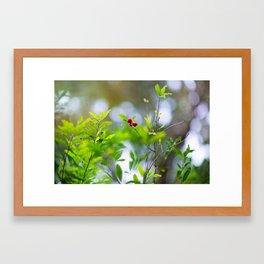 Sunlit Berries Framed Art Print