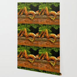 Tigress Lying on her Perch  Wallpaper