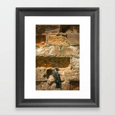 Bird on a wall Framed Art Print