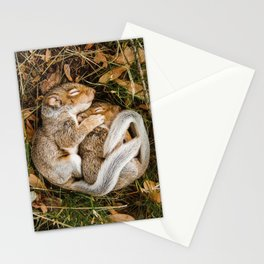 Two baby squirrels cuddling as they sleep Stationery Cards