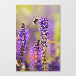 Lavender, Bees and Dreams Canvas Print