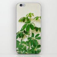 plant iPhone & iPod Skins featuring Plant by sakinarawr