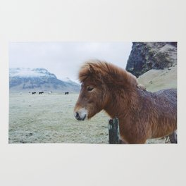 Brown Horse in Iceland Rug