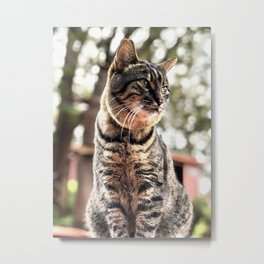 Forest Kitty (Lanai Cat Sanctuary) Metal Print
