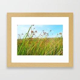 flowers in daylight Framed Art Print