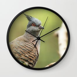 Crested Pigeon Wall Clock