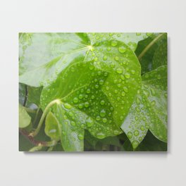 rain droplets Metal Print