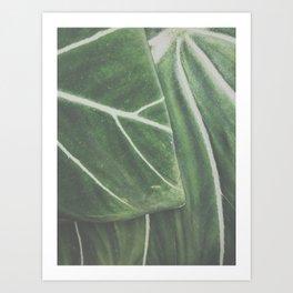 overlapping leaves Art Print