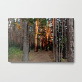 The pine forest Metal Print
